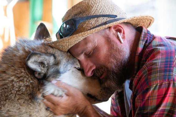 wolf social impact
