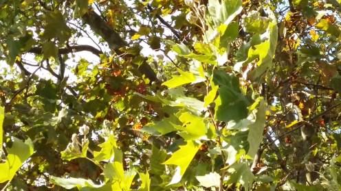 2016_Sept 17 Bäume2