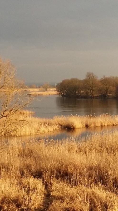 Odra river view