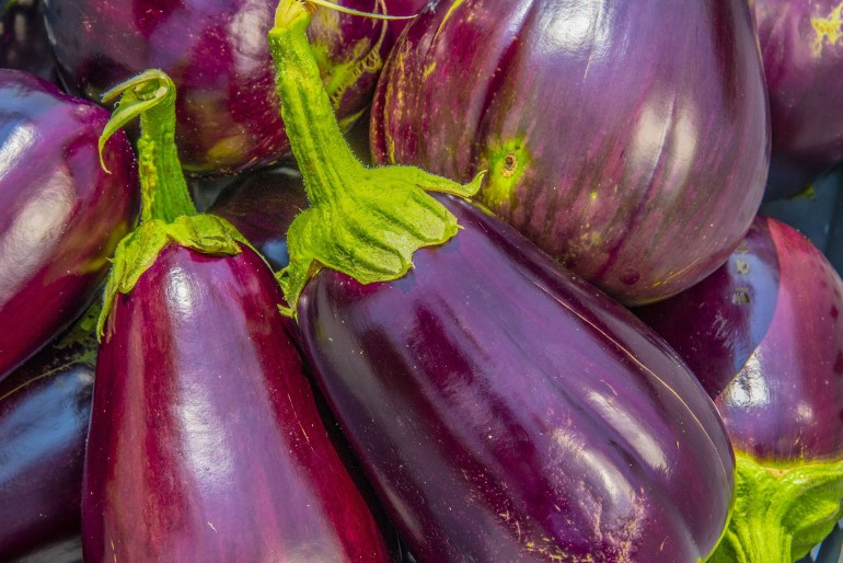 10 Vegetables that are really fruits_eggplant