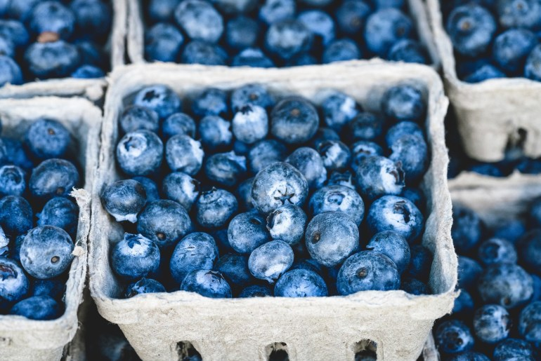 Maine blueberry crop hit hard