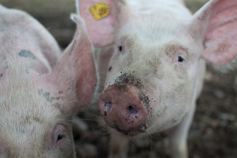 Germans ditching pork heavy diets by Everybody Craves