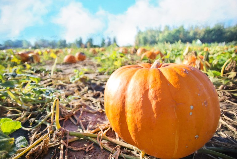 Where to pick your own pumpkin and apples in Pittsburgh