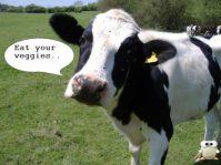 Photo-Editor_cow2
