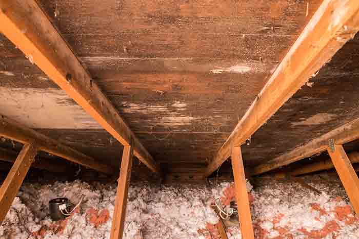 identifying mold in crawl space