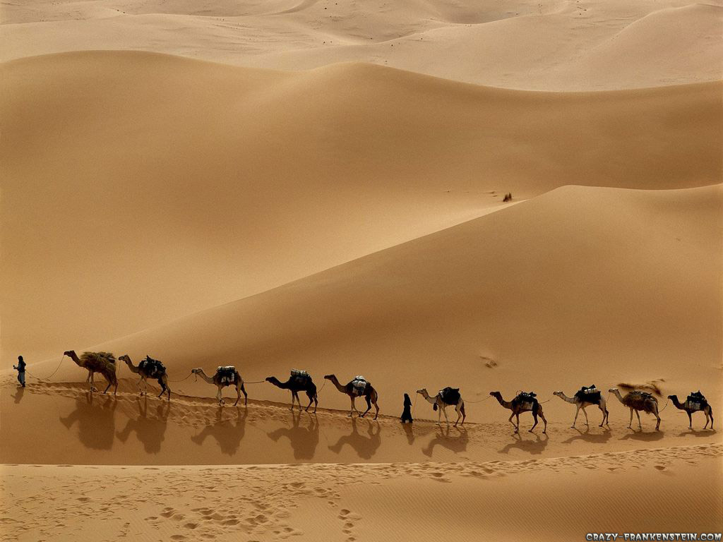 Camel-Wallpaper-On-Desktop