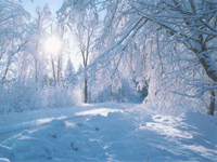 Winter Beautiful wallpapers
