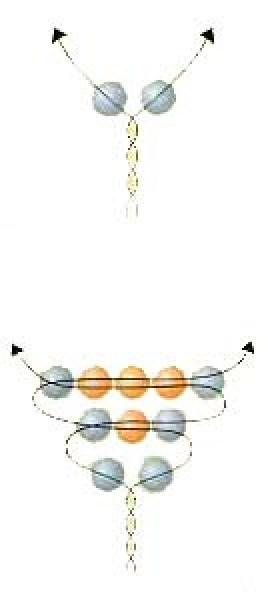 cvetok-anyutiny-glazki-sdelat1