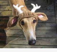 Прикольная вязанная одежда для собак