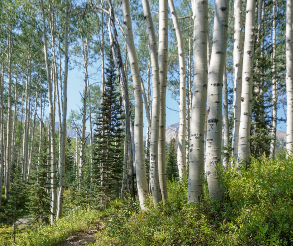 Kebler Pass, Hikes in Crested Butte, hiking trails on Kebler Pass, Hiking near Gunnison, Colorado hikes, Hiking trails in Colorado, Lost Lake Campground, best camping in Colorado, best easy hikes in Colorado mountains,