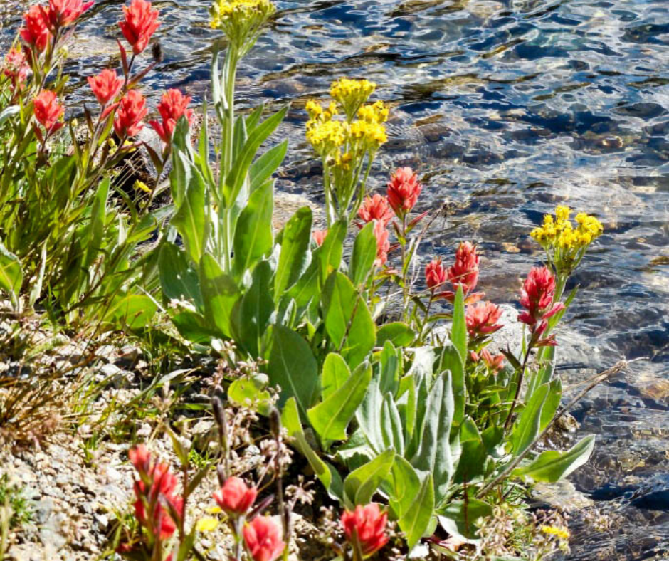 Colorado wildflowers, Blue Lakes Trail, Breckenridge hikes, hikes near Breckenridge, Colorado hikes, family friendly, where to go with kids in Colorado. waterfall hikes, alpine lakes