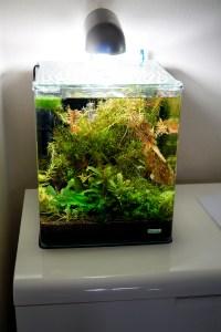 """Shrimp Tank for the """"leftover shrimps"""""""