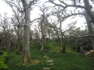 Nan-Lian-Garden-3