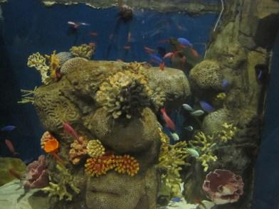 Ocean-Park-Hong-Kong-fishes