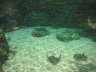 Ocean-Park-Hong-Kong-stingray
