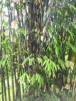 pinto-art-museum-bamboo