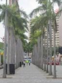 Victoria-Harbour-trees