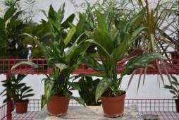 Tropical Plants for $3.50