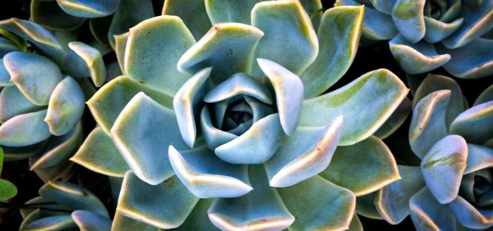 closeup photo of succulent flowers
