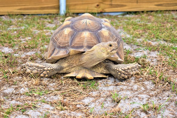 Tortoise Shell Problems