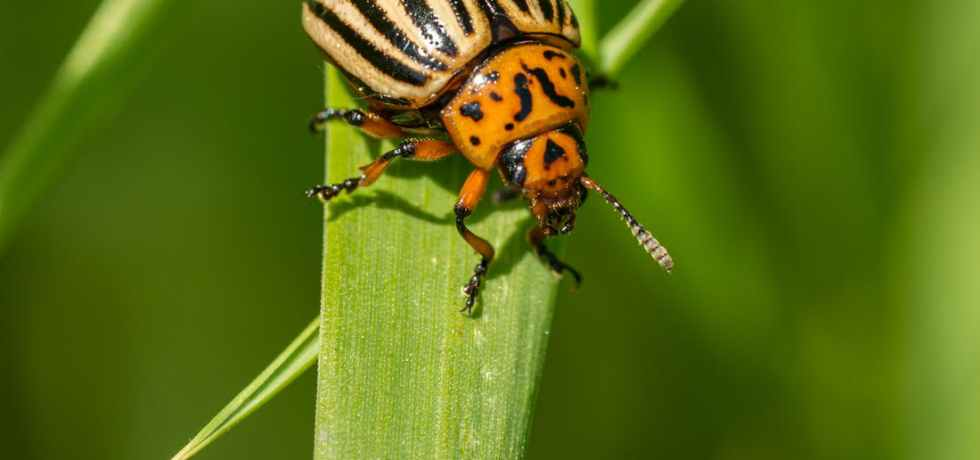 bright beetle on green plant in countryside
