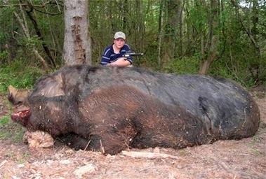 In this photo released by Melynne Stone, Jamison Stone, 11, poses with a wild pig he killed near Delta, Ala., May 3, 2007. Stone's father says the hog weighed a staggering 1,051 pounds and measured 9-feet-4 from the tip of its snout to the base of its tail. If claims of the animal's size are true, it would be larger than ``Hogzilla,'' the huge hog killed in Georgia in 2004.