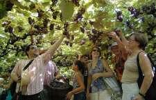 Vinícola Salton e parceiros apresentam evento para celebrar o período mais perfumado da Serra Gaúcha.