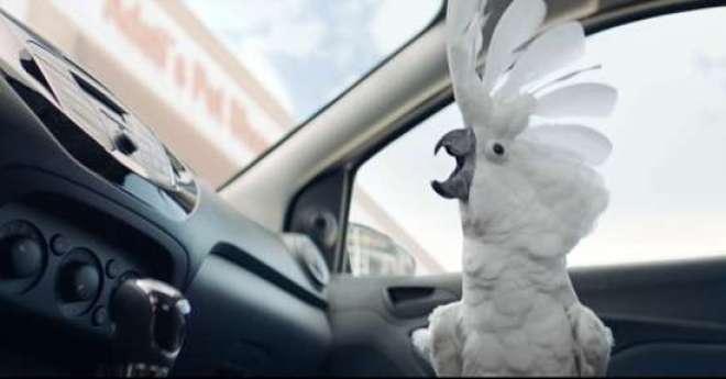 O filme é estrelado por uma cacatua que aciona o sistema de voz para ouvir rock e dançar quando o dono sai do carro.