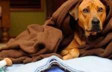 Prevenção é fundamental para asaúdedos pets.