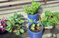 Tire agora suas maiores dúvidas sobre como montar uma horta