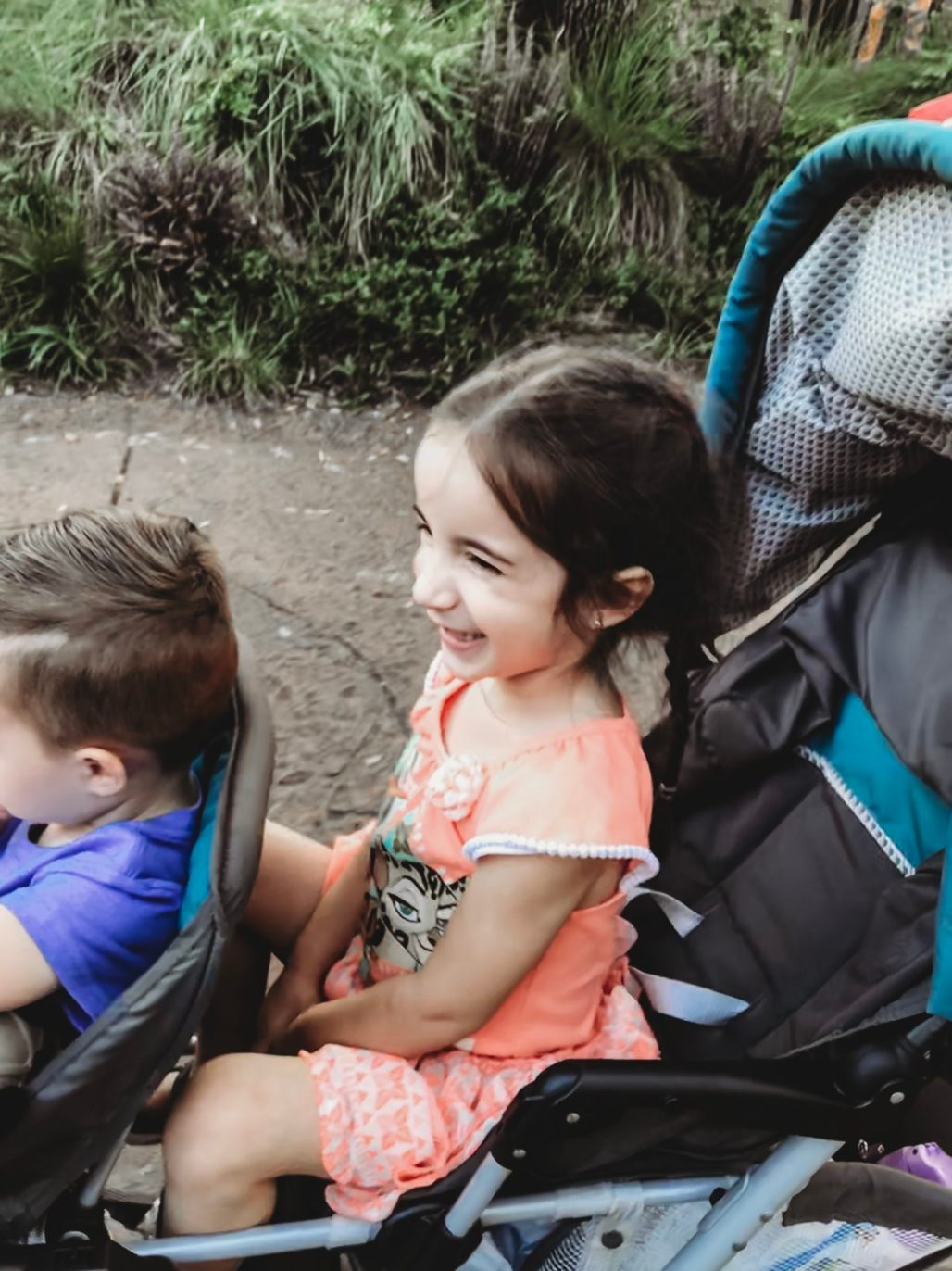 Guide to Animal Kingdom for Toddlers and Preschoolers