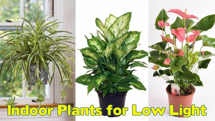 indoor plants to purify the air