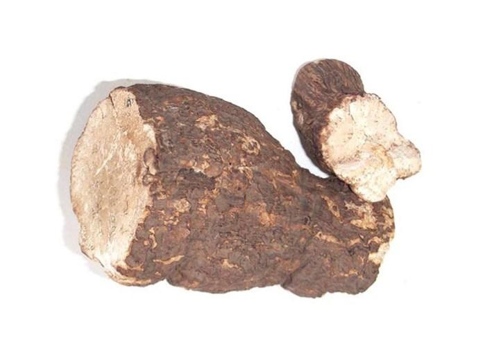Poria Mushroom