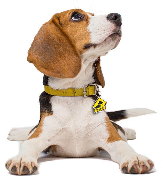 DogSafe system