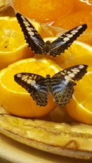 Butterflies (LI Aquarium)