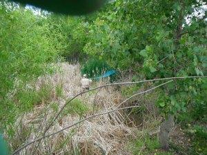 Fowles Marsh cattail truck spray