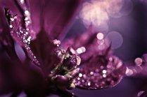 35% off SALE Sparkles purple plum sparkly romantic romance love dark women spring elegant - Sparkles - Fine Art Photography Print
