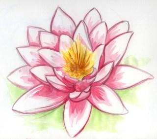 Fleur de lotus en aquarelle