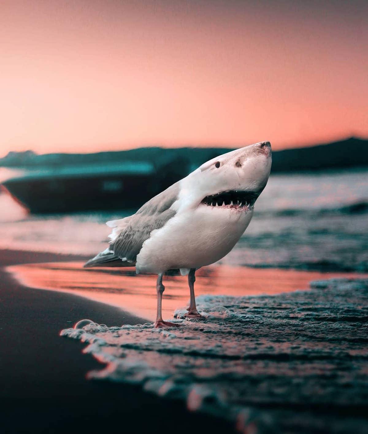 Photomontage animaux Ronald Ong