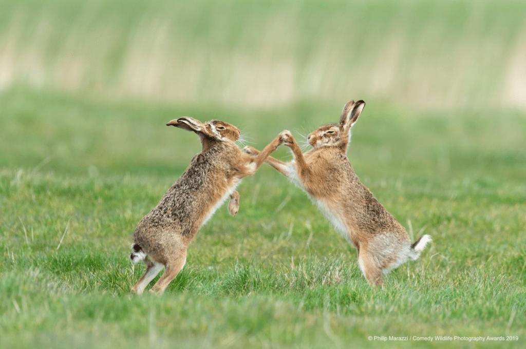 Voici les 40 meilleurs clichés du concours de la photo animale la plus amusante de 2019 ! By Mélanie D. Comedy-wildlife-meilleures-photos-animaux-2019-27