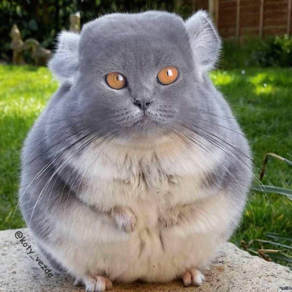 Le créatif Koty Vezde imagine un monde absurde où tous les animaux ont le visage d'un chat