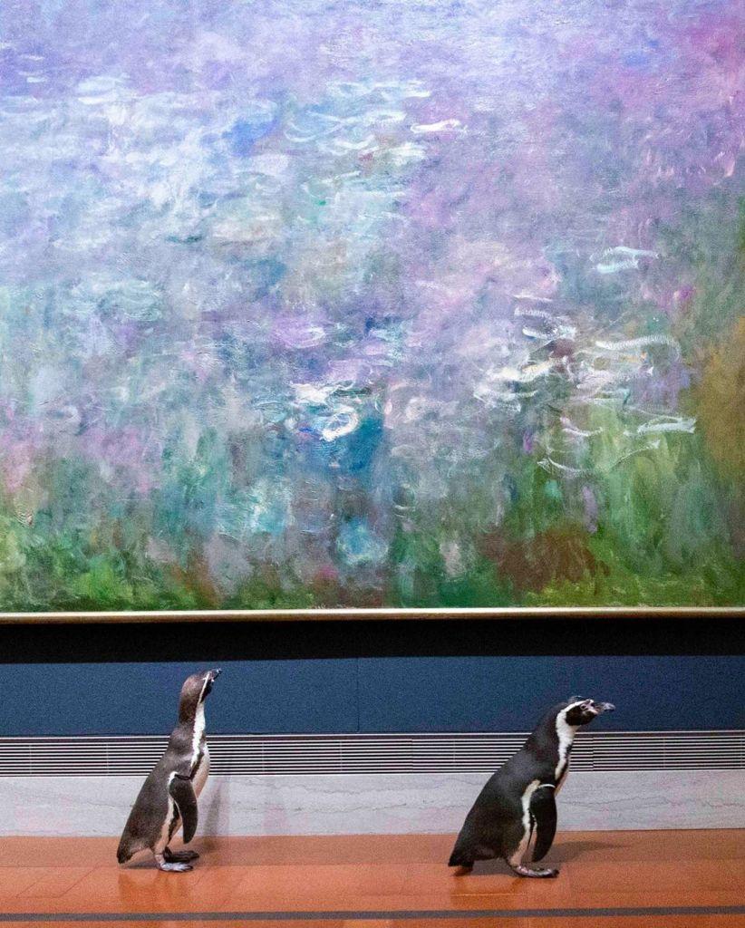 Le zoo de Kansas City offre une visite privée d'un musée à ses manchots