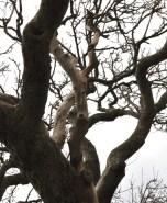 Up tree 1