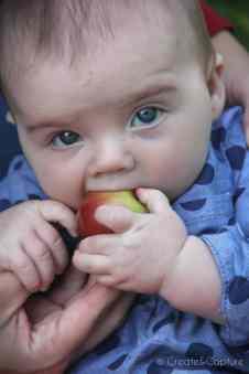 imgHeinsler Family Apple Picking 2016_2000