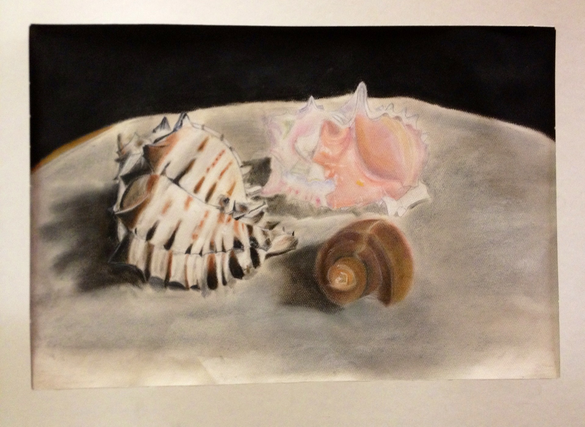 Sea Shell Pastel Drawings Observational Drawing Skills