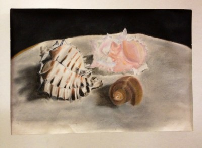 Sea Shell Pastel Drawings Observational Drawing Skills Lesson