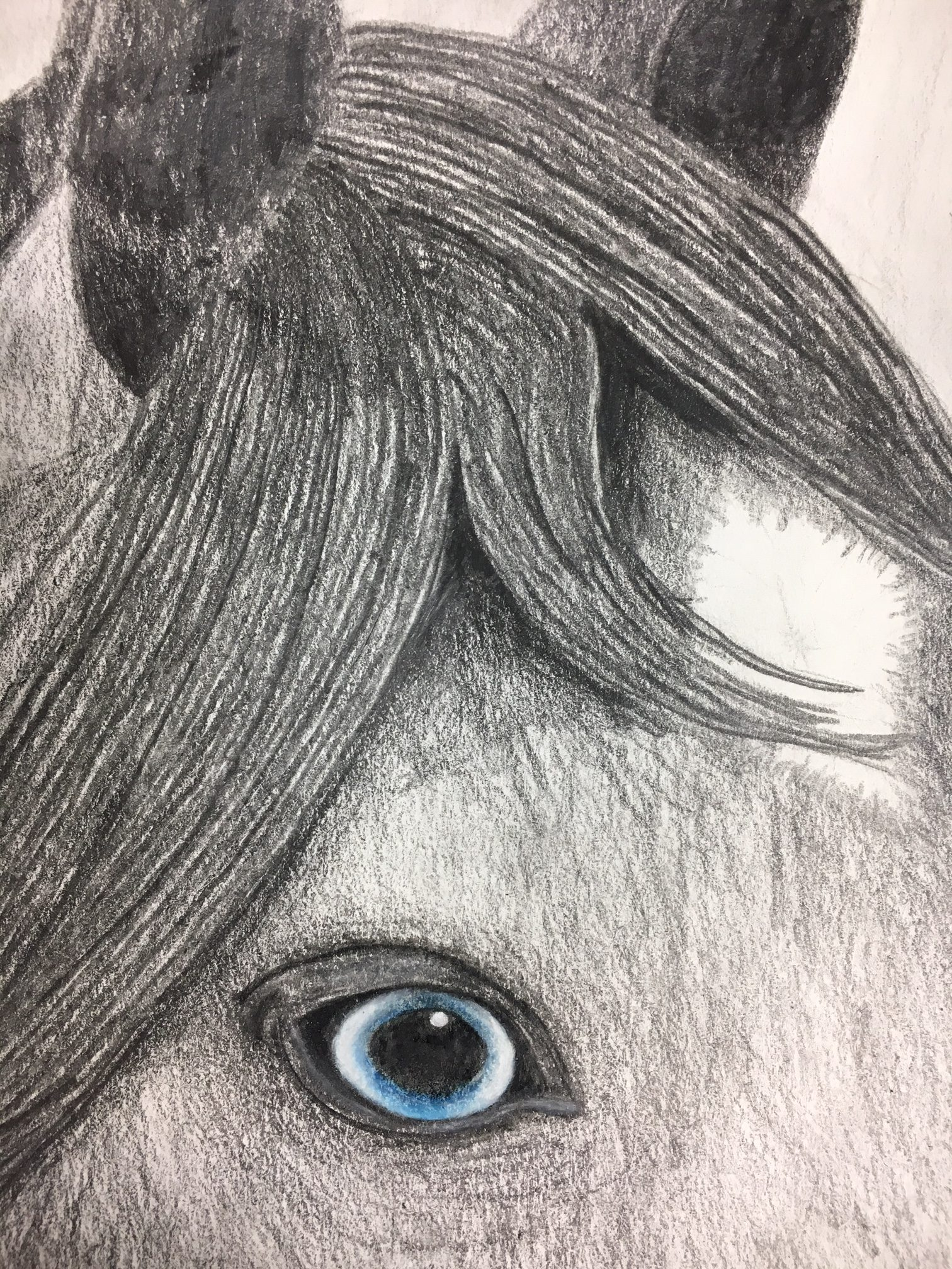 Emphasis animal eyes graphite and colored pencil drawing create
