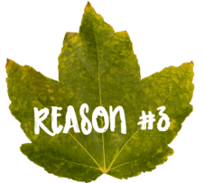 Give Thanks For Teachers Reason 3