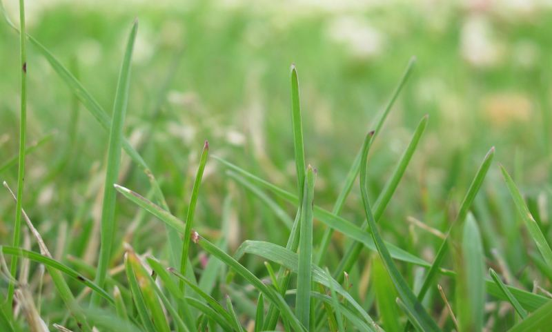 Macro Close-up of Green Grass