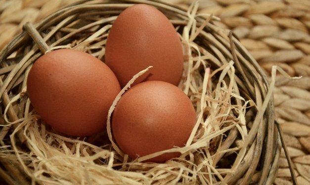 Gesunder und Veganer Ei-Ersatz – So geht´s